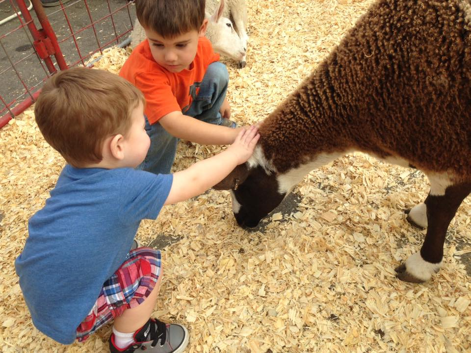 two small boys petting a goat