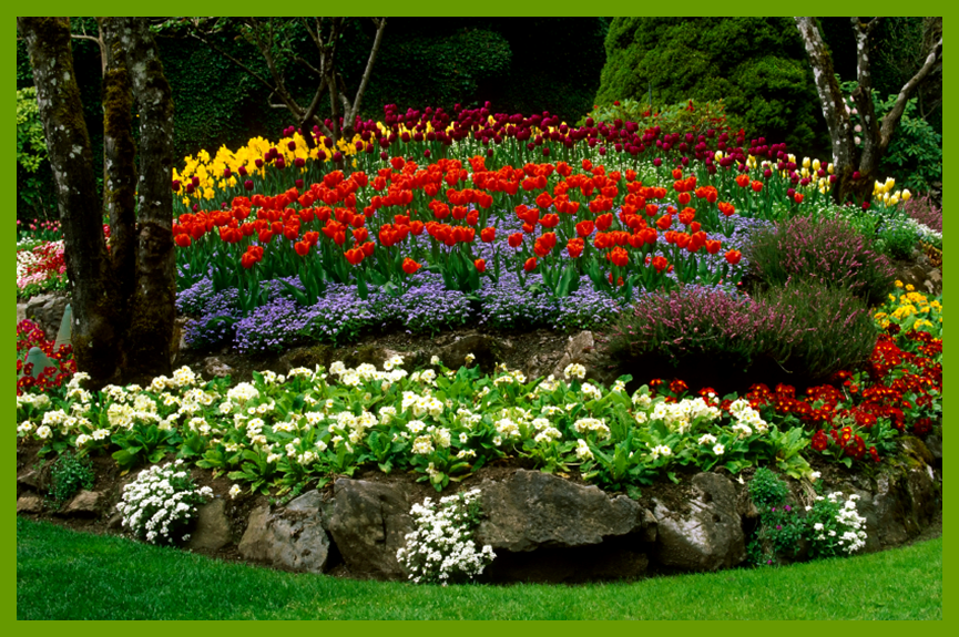 Colorful Flowerbed in the Park